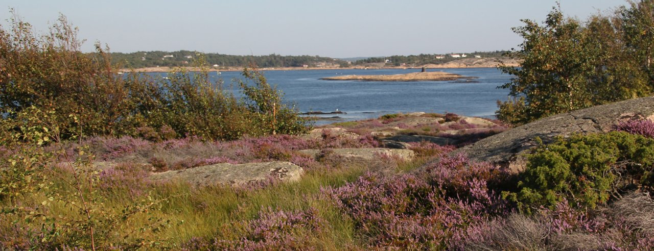 caba-Røsslyng-kyst-IMG_3814