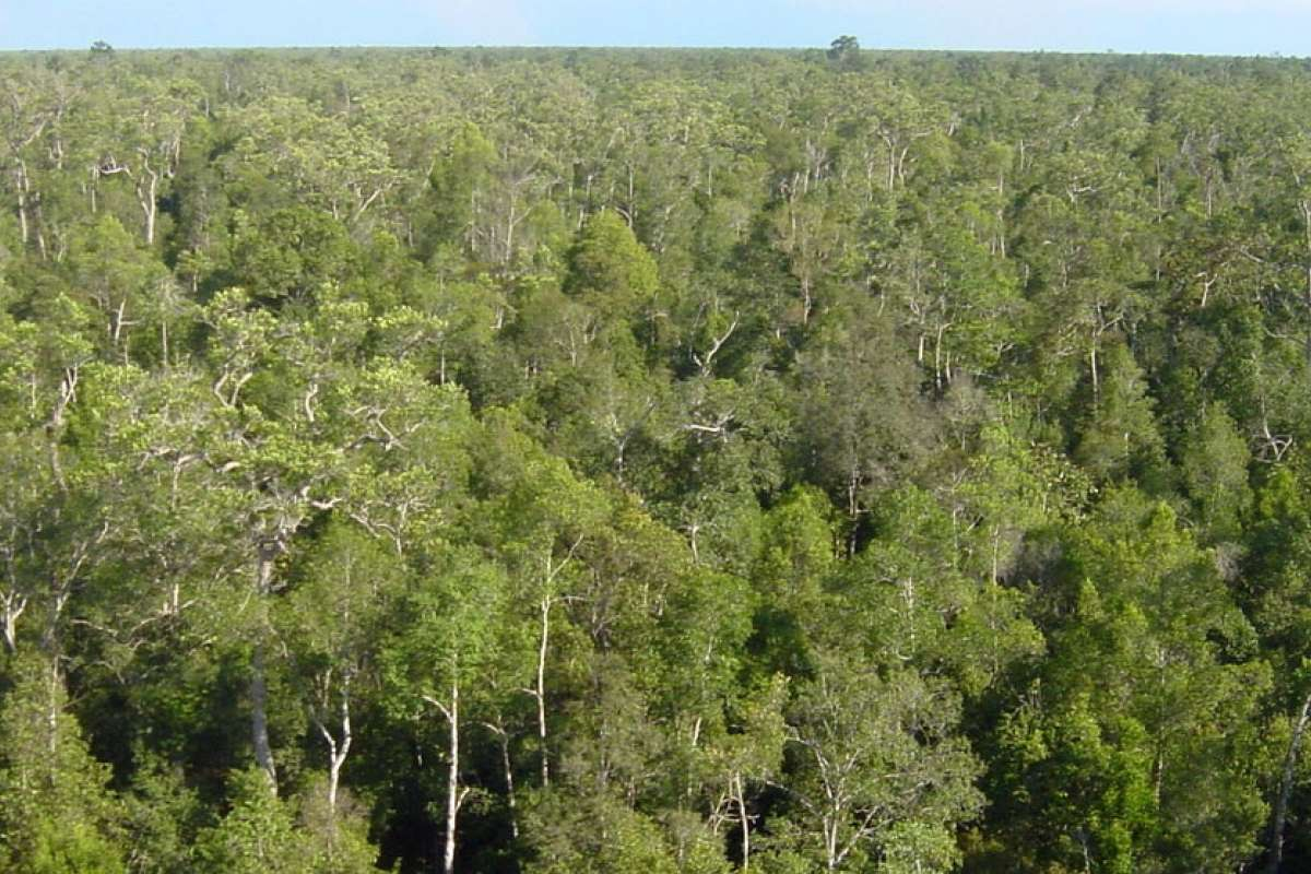 Peat swamp forest from above_Central Kalimantan_Jauhiainen_cropped.jpg