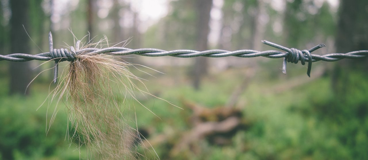 how to catch hair from a bear nibio