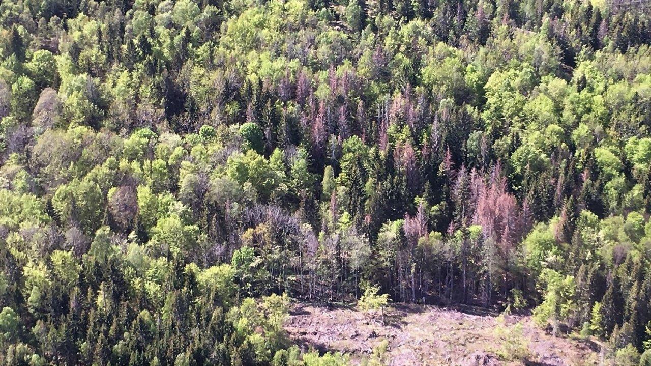 Skogskader Lågendalen_cropped