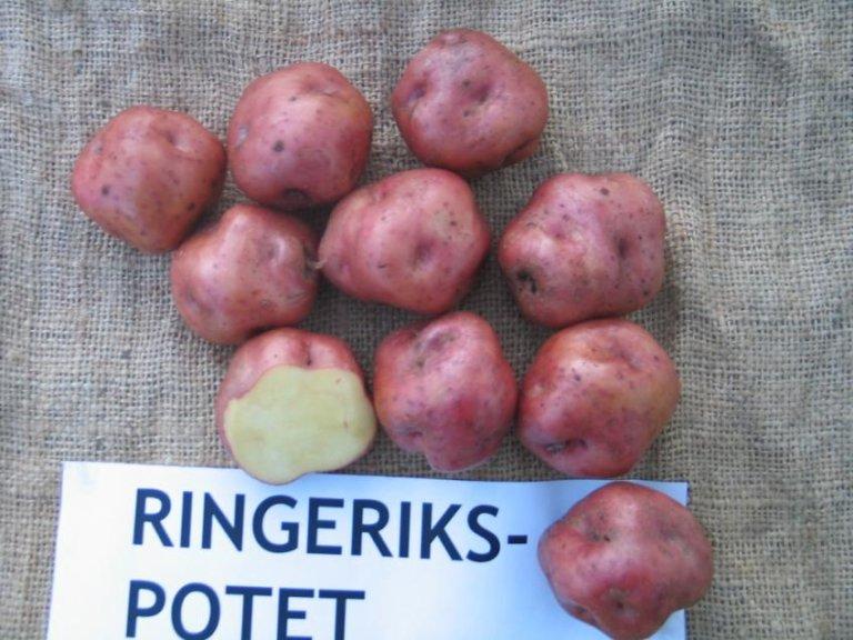 Ringerikspotet-3-Jarle-Møllerhagen.jpg